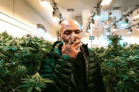 Ο Mike Tyson λέει σταμάτησε την μαριχουάνα λόγω του αγώνα με τον Jones