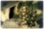 0c420c8b-dc99-49f1-a8f5-48b93b7b46b3.jpg