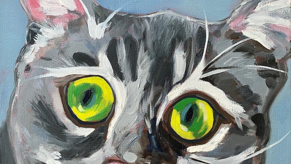 Commissioned Pet Portrait - Cat