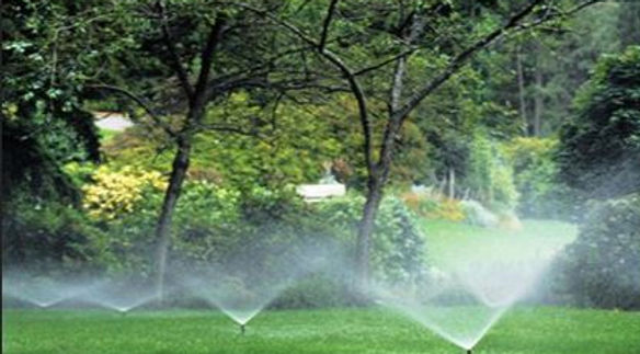 irrigation 2.JPG