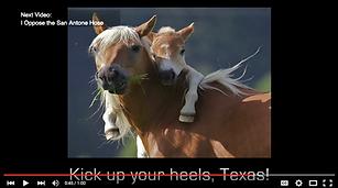 mama and baby horse