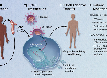 CAR-T cells are the future of biomedicine. Read this if you don't believe me.