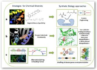 Nouveau papier sur la Biologie Synthétique