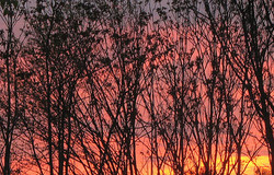 arbres en ciel