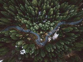 Rainforest Action Initiative