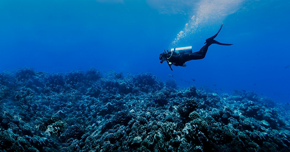 scuba diver under water with corals