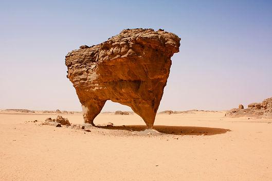 Desert Wildlife Conservation