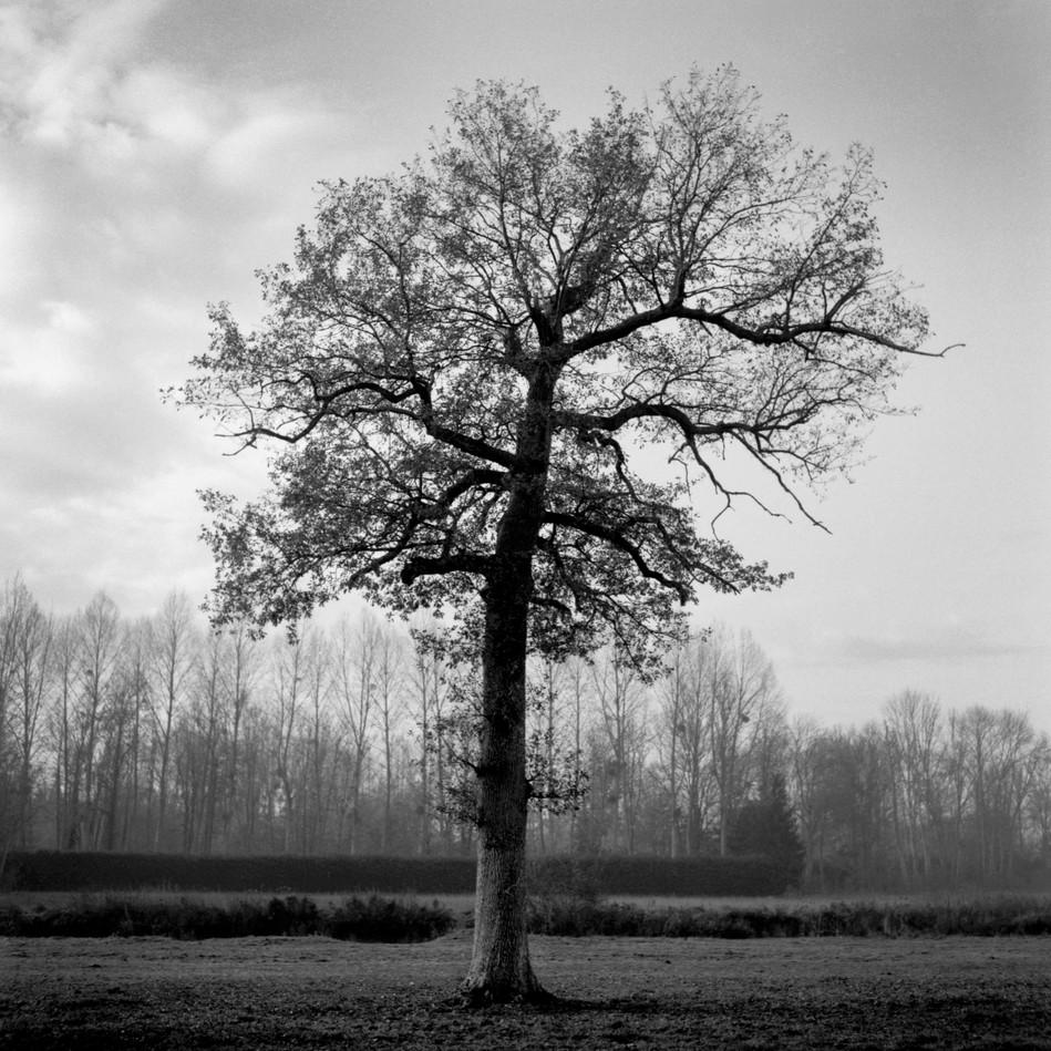 Numériser-tree.jpg