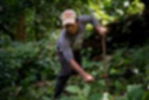 2018-Mexique-Chiapas-Plantation_Mokaya-C