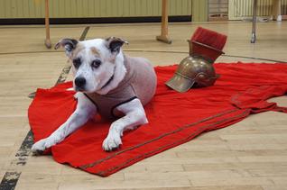 Klassenhund Paula