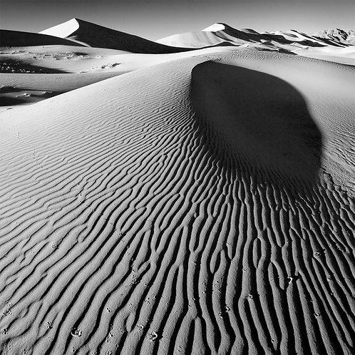 Dune & Tracks