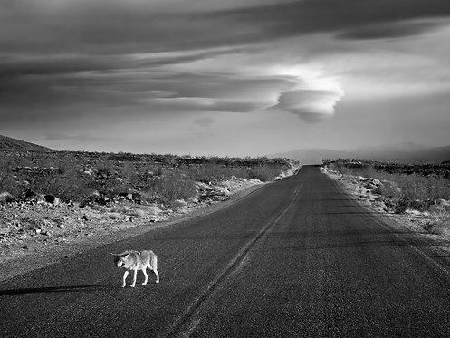 Coyote & Cloud