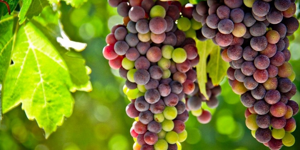Transitional Wine Seminar