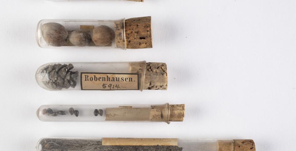 Robenhausen-Jonas.jpg