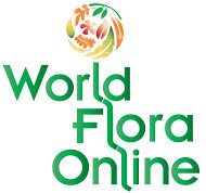 IAPT – World Flora Online collaboration