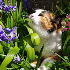cats-3302777_1920.jpg