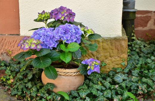 flowerpot-1345371_1920.jpg