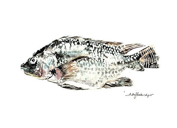 Fish Blank Card