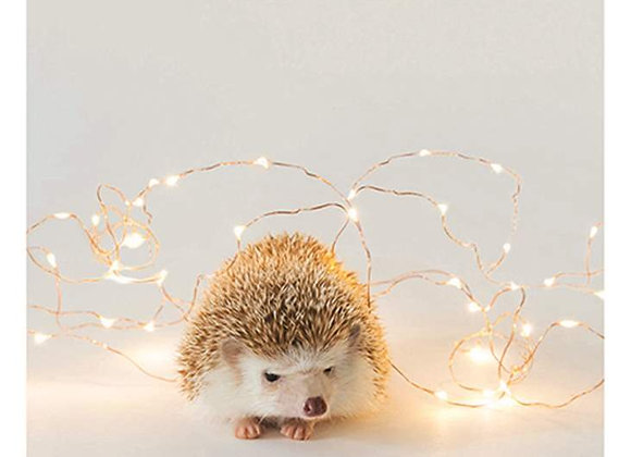 Hedgehog and Light Holiday Card