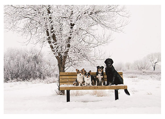 Winter Dogs Holiday Card