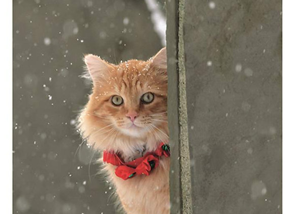 Cat With Red Collar Holiday Card