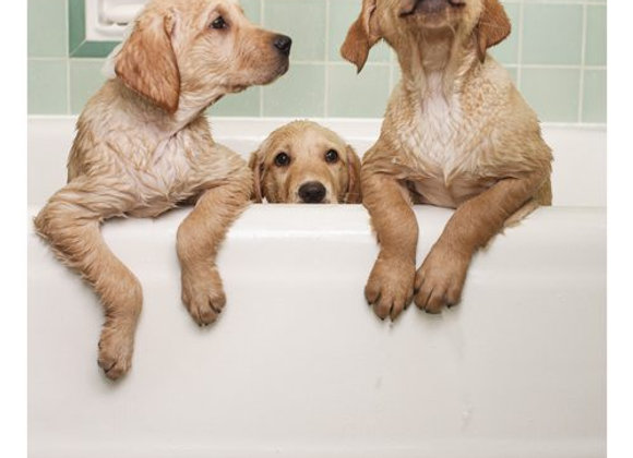 Three Dogs In Tub Birthday Card