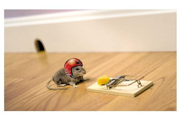 Mouse & Helmet Birthday Card