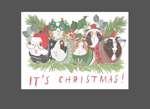 Guinea Pigs in Sweaters - Holiday Boxed Cards