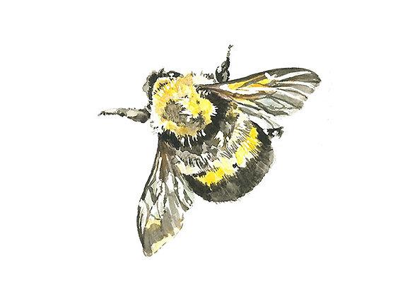 Bee Blank Card by Niki Kingsmill