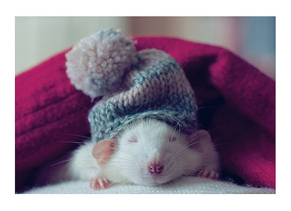 Palm Press Mouse With Hat Holiday Cards