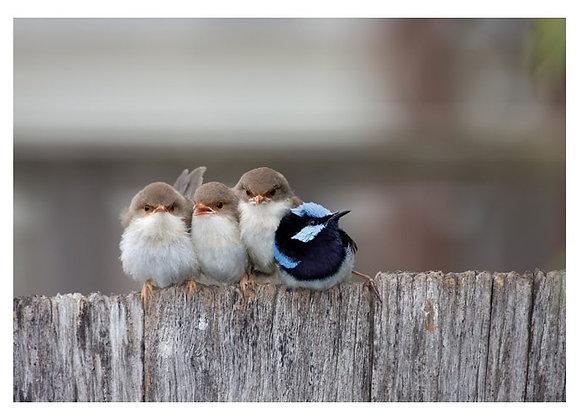 Four Birds Birthday Card