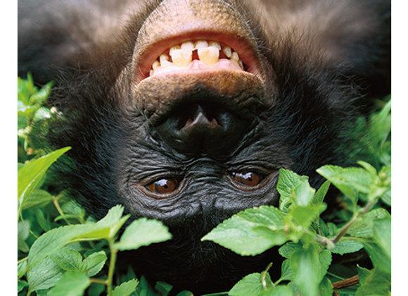 Upside Down Chimp Birthday Card