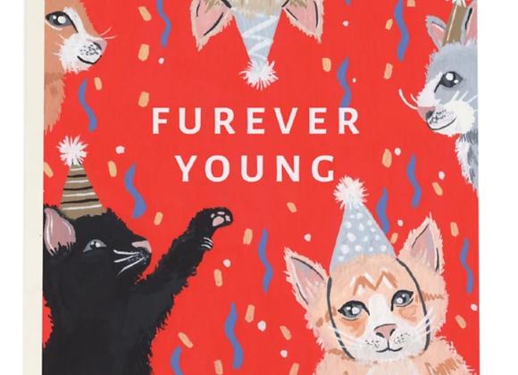 Kitten Party Birthday Card