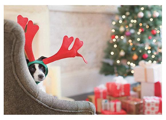 Dog Reindeer Holiday Card