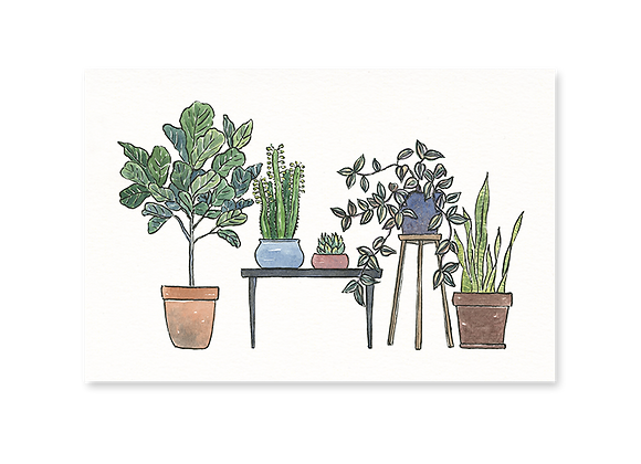 Houseplants Postcard