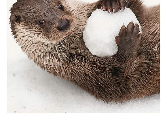 Otter Snowball Holiday Card