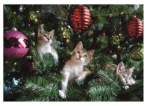 Kittens In Xmas Tree Card