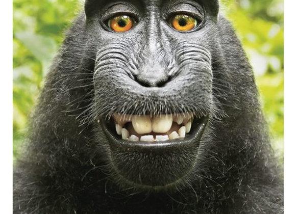 Selfie Monkey Birthday Card