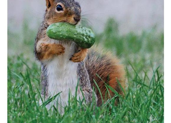 Squirrel Pickle Birthday Card