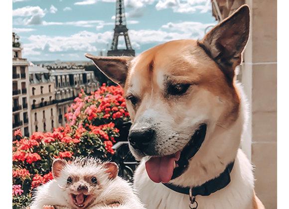 Paris Friendship Card