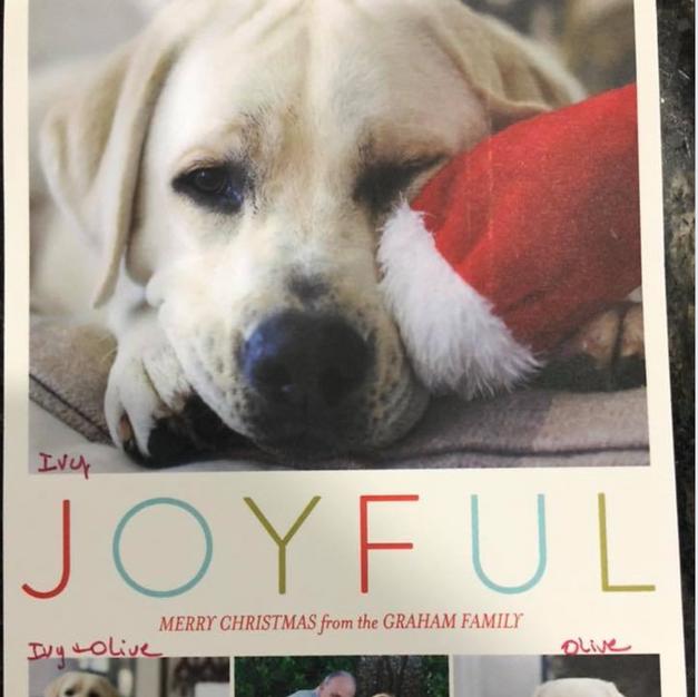 White Lab Christmas Card