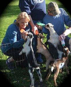 goats1.jpeg