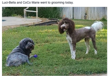 Luci-Bella and Coco Marie