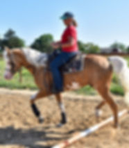 2017 Half Arabian Palomino Stallion