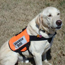Storm the Search Dog