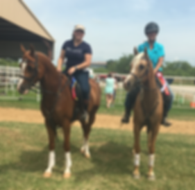 Horse Competition Winners