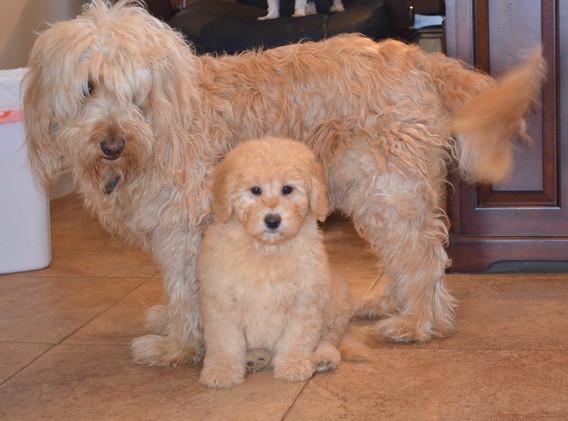 Nala and baby