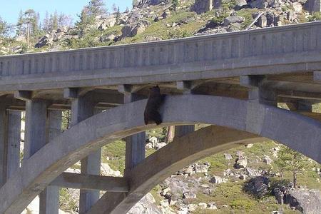 bear2f.JPG