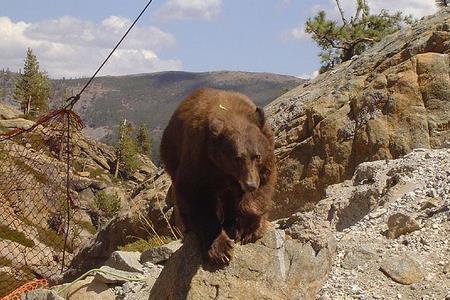 bearpic6f.JPG