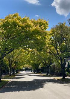 Quiet street, rear property